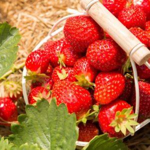 La ferme frutière